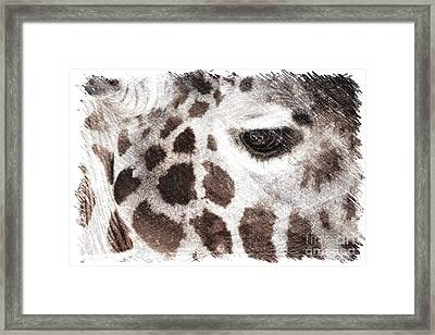 Sweet Giraffe  Framed Print by Carol Groenen
