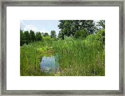 Sweet Grass Gardens Nursery Carries Framed Print by Angel Wynn