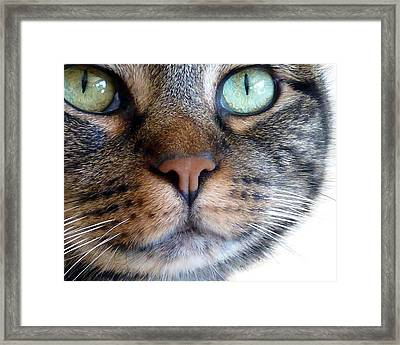 Sweet Green Eyes Framed Print by Patricia Strand