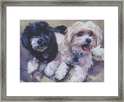 Sweet Havanese Framed Print by Lee Ann Shepard