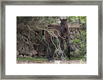 sweet heart - A tender foal wait his beloved mother  Framed Print