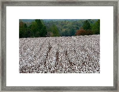 Framed Print featuring the photograph Sweet Home Alabama by Linda Mishler