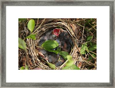 Sweet Home Framed Print by Vadim Levin