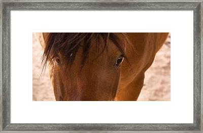 Sweet Horse Face Framed Print