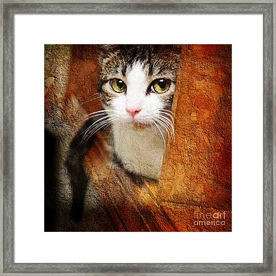 Sweet Innocence Framed Print by Andee Design