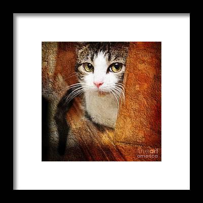 Andee Design Cat Eyes Framed Prints