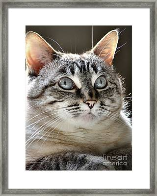 Sweet Innocence Framed Print by Deb Halloran