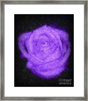 Sweet Lavender Rose Framed Print