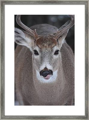Framed Print featuring the photograph Sweet Lips by Rita Kay Adams