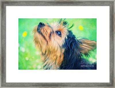 Sweet Little Dog Framed Print by Angela Doelling AD DESIGN Photo and PhotoArt
