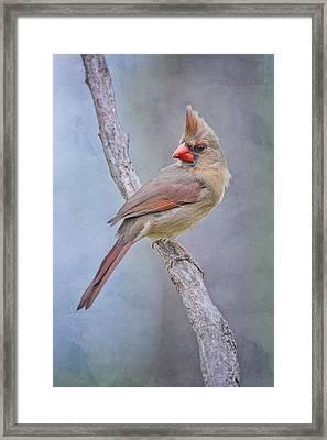 Sweet Little Lady Redbird Framed Print by Bonnie Barry
