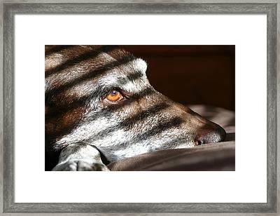 Sweet Madie Girl Framed Print by Brook Burling