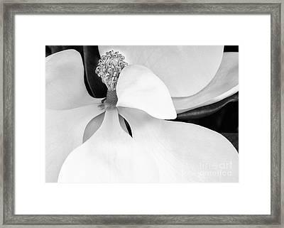 Sweet Magnolia Blossom Framed Print by Sabrina L Ryan