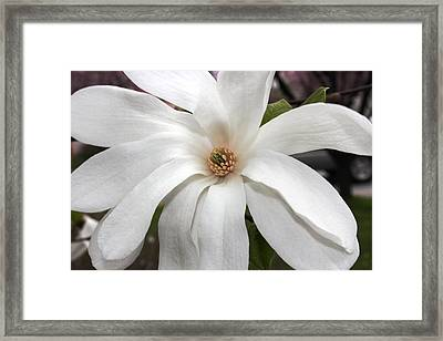 Framed Print featuring the photograph Sweet Magnolia by Judy Palkimas