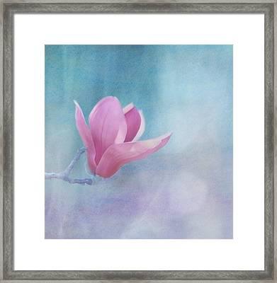 Sweet Magnolia Framed Print by Kim Hojnacki