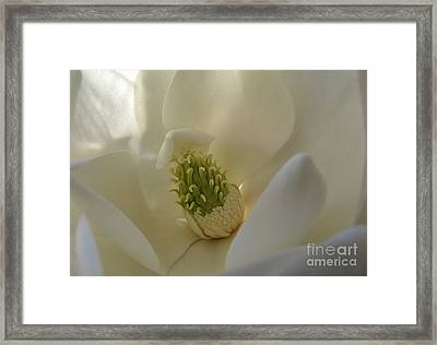Framed Print featuring the photograph Sweet Magnolia by Peggy Hughes