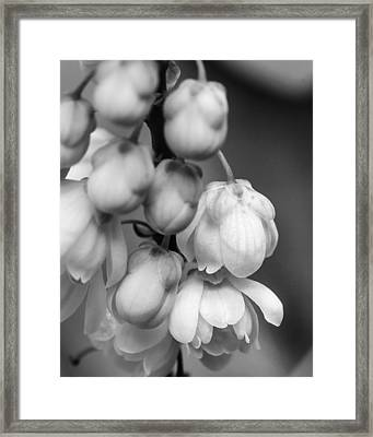 Framed Print featuring the photograph Sweet Mahonia Bloom by Patricia Schaefer