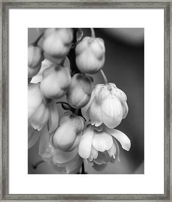 Sweet Mahonia Bloom Framed Print