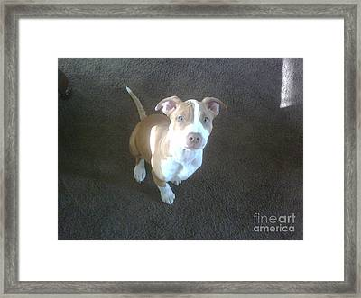 Sweet Nala Framed Print by Jeff Pickett