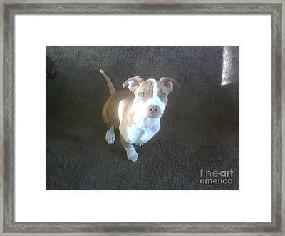 Sweet Nala Framed Print by Jeff Pickett