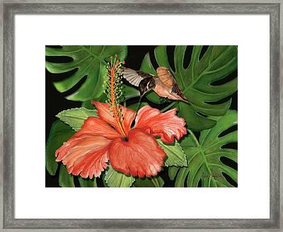 Sweet Nectar Framed Print