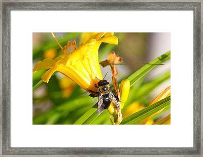 Sweet Nectar Framed Print by Jerome Lynch