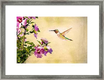 Sweet Nectar Framed Print by Sennie Pierson