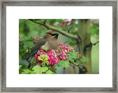 Sweet Nibbles Framed Print by Annie Pflueger