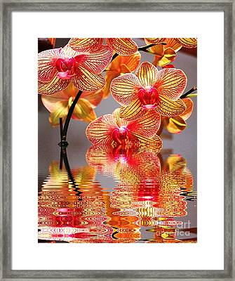 Sweet Orchid Reflection Framed Print