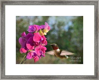 Sweet Pea Hummingbird Framed Print by Debbie Portwood