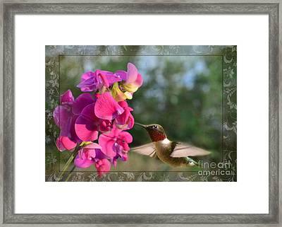 Sweet Pea Hummingbird IIi Framed Print by Debbie Portwood