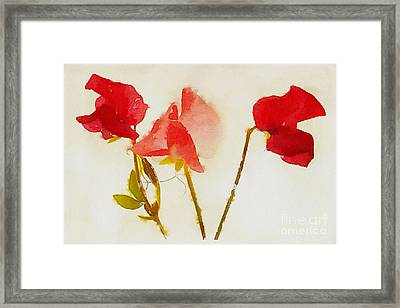 Sweet Pea Watercolour Framed Print by John Edwards