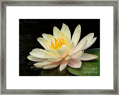 Sweet Peach Water Lily Framed Print by Sabrina L Ryan