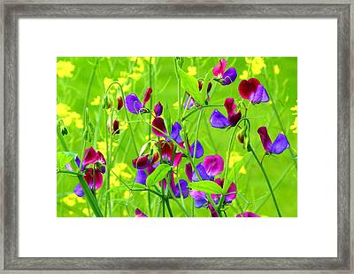 Framed Print featuring the photograph Sweet Peas by Byron Varvarigos
