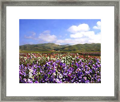 Sweet Peas Galore Framed Print