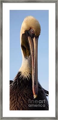 Sweet Pelican Face Framed Print