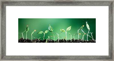 Sweet Pepper Framed Print by Panoramic Images