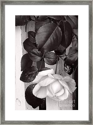 Sweet Petals Framed Print by Avis  Noelle