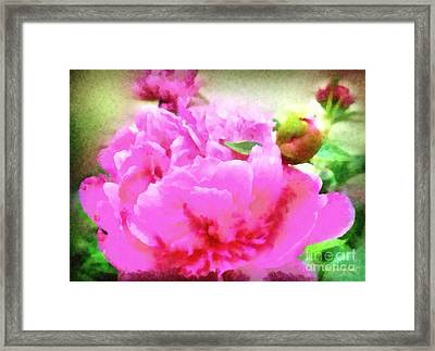 Sweet  Pink Peony Framed Print by Janine Riley