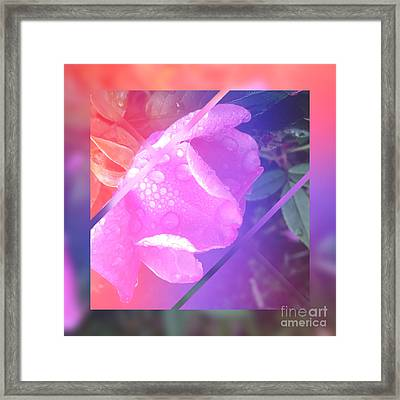 Sweet Pink Wild Rose With Dew Drops Framed Print