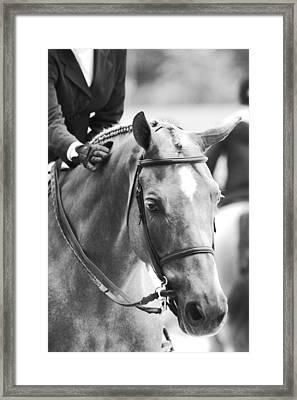 Sweet Pony Framed Print
