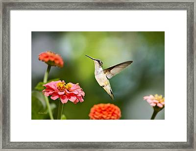 Framed Print featuring the photograph Sweet Promise Hummingbird by Christina Rollo