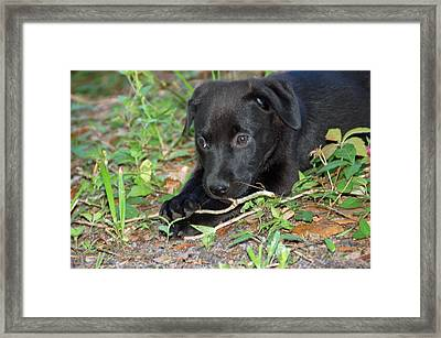Sweet Puppy Framed Print by Aimee L Maher Photography and Art Visit ALMGallerydotcom