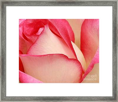 Sweet Rose Framed Print by Sabrina L Ryan