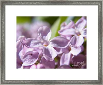 Framed Print featuring the photograph Sweet Scent Of Spring by Agnieszka Ledwon