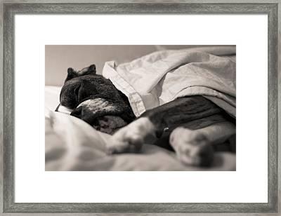 Sweet Sleeping Boxer Framed Print