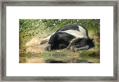 Sweet Slumber Framed Print by Fran J Scott