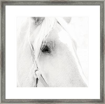 Sweet Soul Belgian Horse Black And White Framed Print by Terry DeLuco