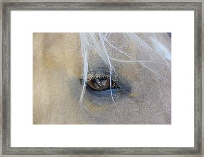 Sweet Soul Framed Print