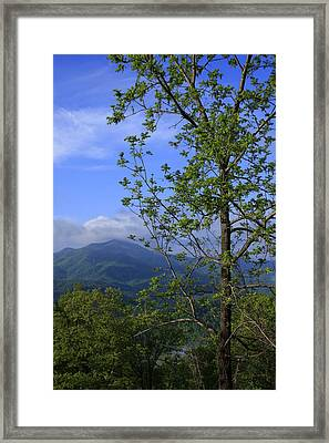Framed Print featuring the photograph Sweet Springtime On The Blue Ridge Parkway Nc by Mountains to the Sea Photo